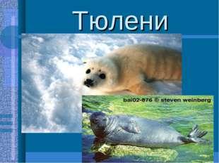 Тюлени Гренландский тюлень, морской заяц,кольчатая нерпа. Хорошо приспособлен