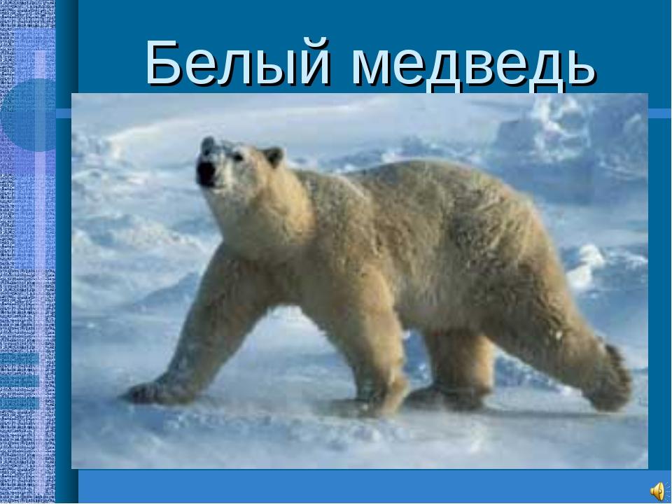 Белый медведь Самый крупный среди хищников(до3м.,800-1000кг.) Необходимые усл...