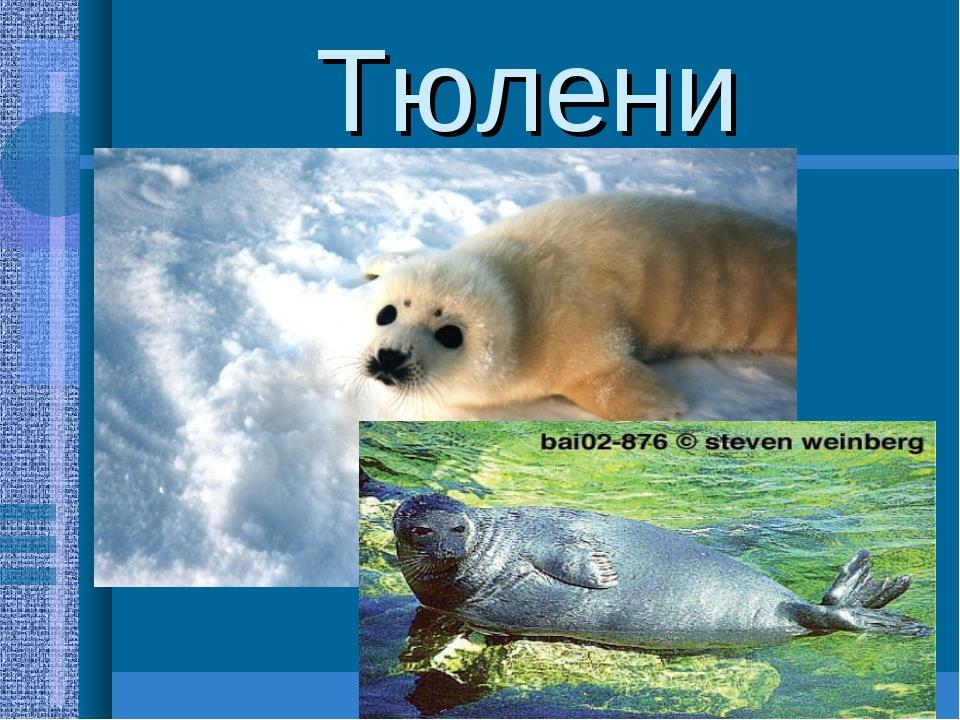 Тюлени Гренландский тюлень, морской заяц,кольчатая нерпа. Хорошо приспособлен...
