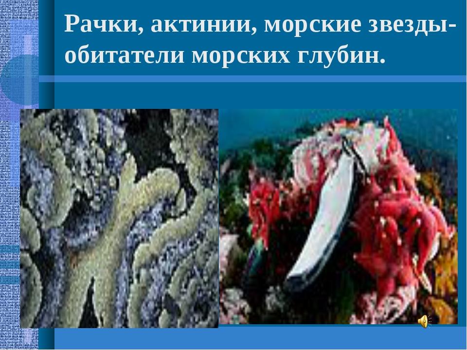 Рачки, актинии, морские звезды- обитатели морских глубин.