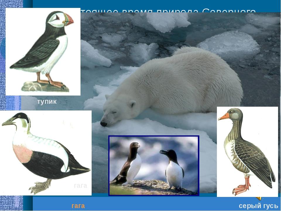 В настоящее время природа Северного Ледовитого океана нуждается в бережном от...