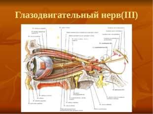 Глазодвигательный нерв(III)