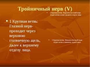 Тройничный нерв (V) 1 Крупная ветвь: Глазной нерв-проходит через верхнюю глаз
