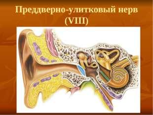 Преддверно-улитковый нерв (VIII)