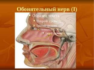 Обонятельный нерв (I)