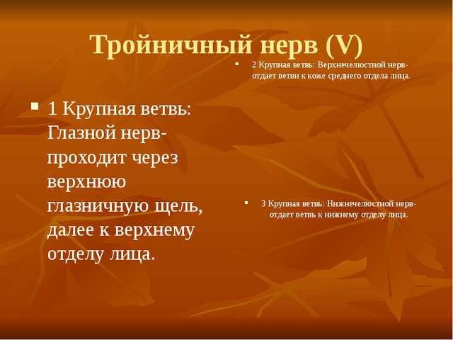 Тройничный нерв (V) 1 Крупная ветвь: Глазной нерв-проходит через верхнюю глаз...