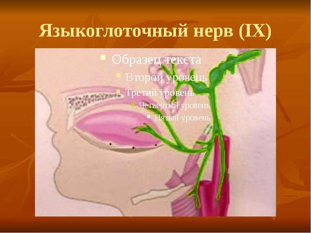 Языкоглоточный нерв (IX)