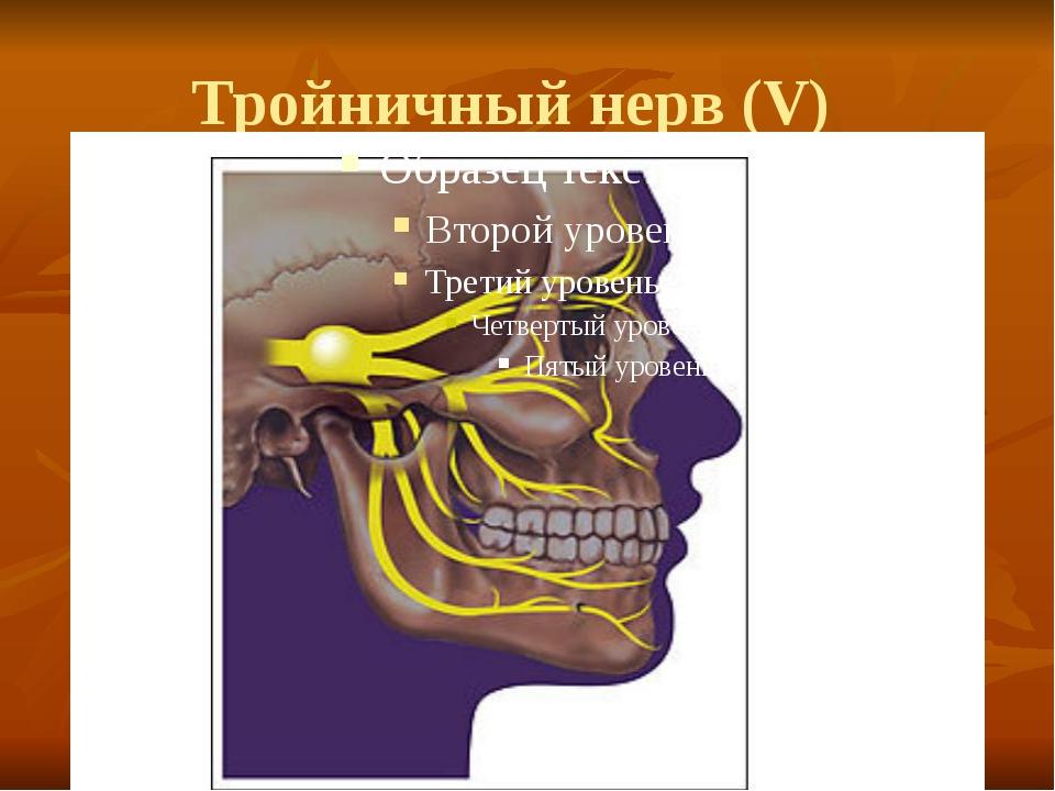 Тройничный нерв (V)