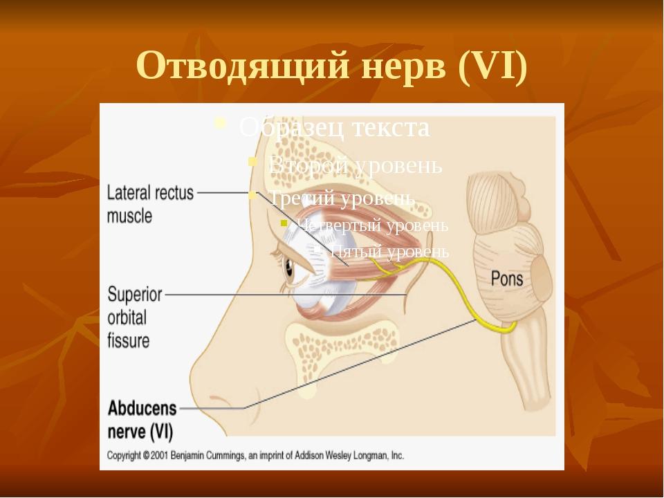 Отводящий нерв (VI)