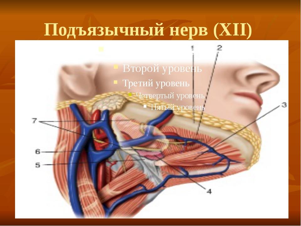 Подъязычный нерв (XII)