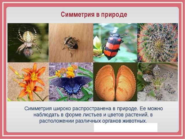 Симметрия в природе Симметрия широко распространена в природе. Ее можно набл...