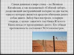 Самая длинная в мире стена – не Великая Китайская, а так называемый «Собачий