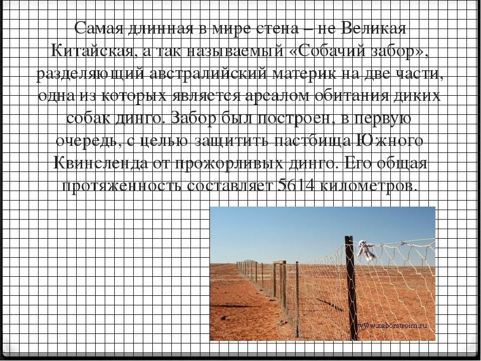 Самая длинная в мире стена – не Великая Китайская, а так называемый «Собачий...