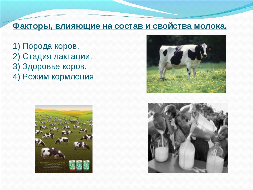 Факторы, влияющие на состав и свойства молока. 1) Порода коров. 2) Стадия лак...