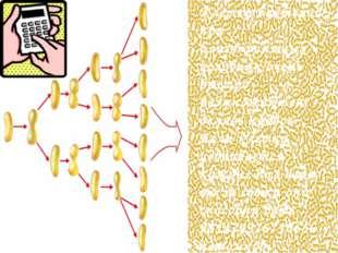Клетки бактерий при благоприятных условиях очень быстро размножаются, делясь