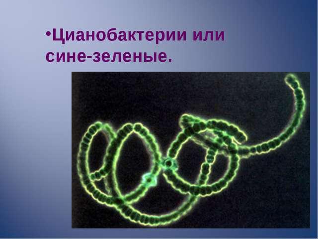 Цианобактерии или сине-зеленые.