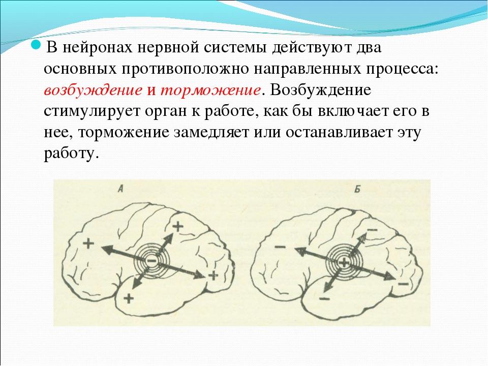 В нейронах нервной системы действуют два основных противоположно направленных...