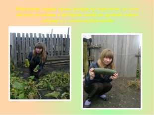 Результат огурцы лучше растут на черноземе, но если обильно поливать и удобря