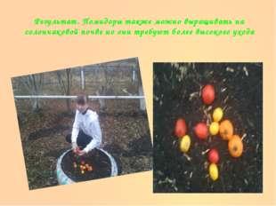 Результат. Помидоры также можно выращивать на солончаковой почве но они требу