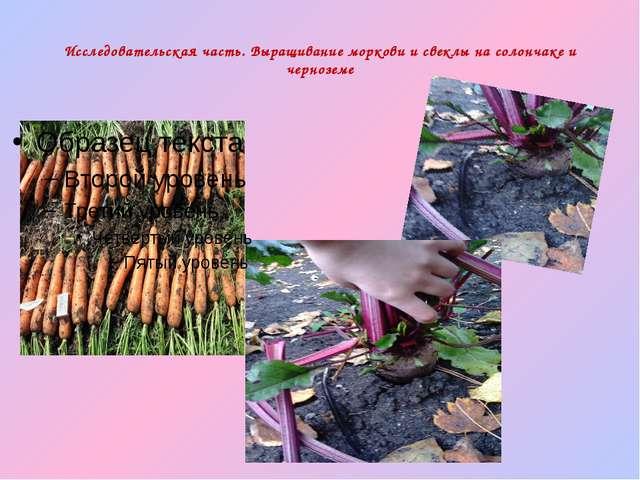 Исследовательская часть. Выращивание моркови и свеклы на солончаке и черноземе