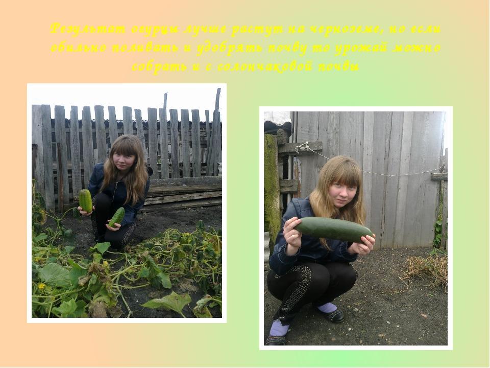 Результат огурцы лучше растут на черноземе, но если обильно поливать и удобря...