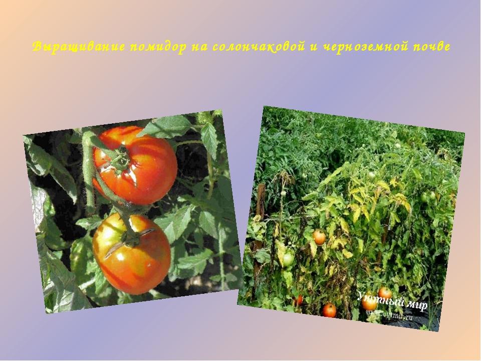 Выращивание помидор на солончаковой и черноземной почве