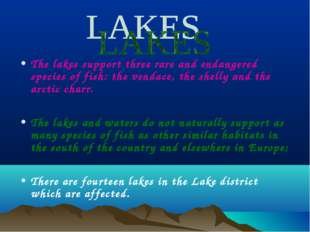 The lakes support three rare and endangered species of fish: the vendace, the