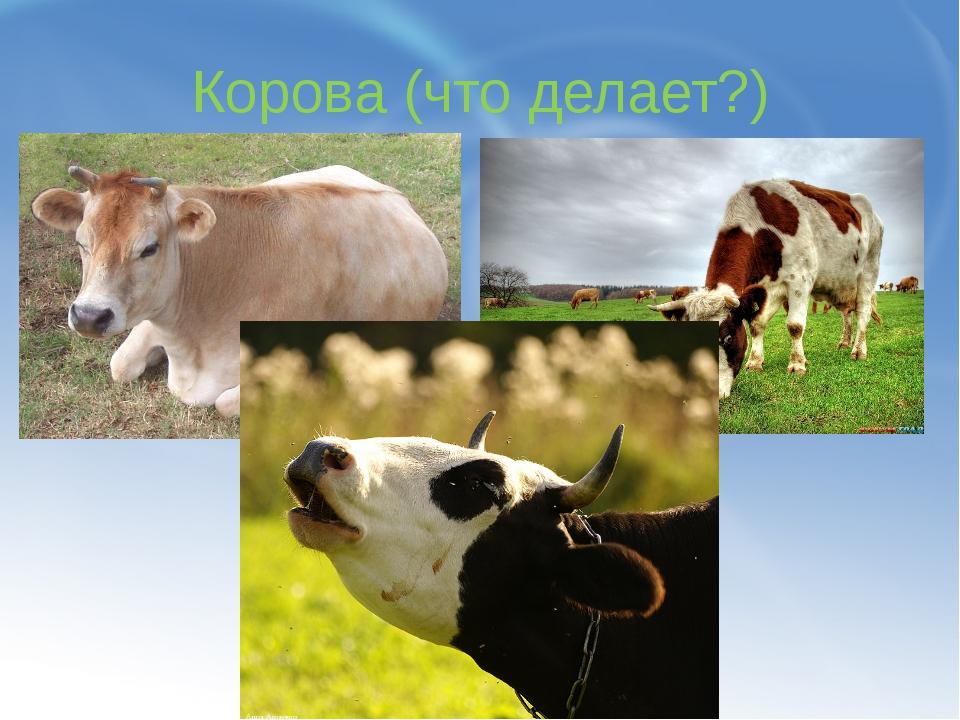 Корова (что делает?)