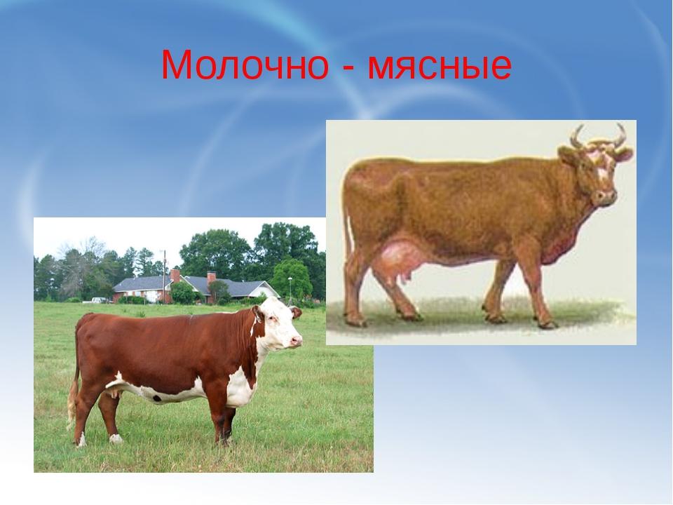 Молочно - мясные