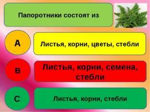Папоротники состоят из A B C Листья, корни, цветы, стебли Листья, корни, семе