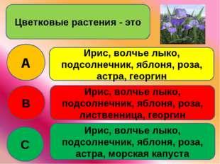 Цветковые растения - это A B C Ирис, волчье лыко, подсолнечник, яблоня, роза,