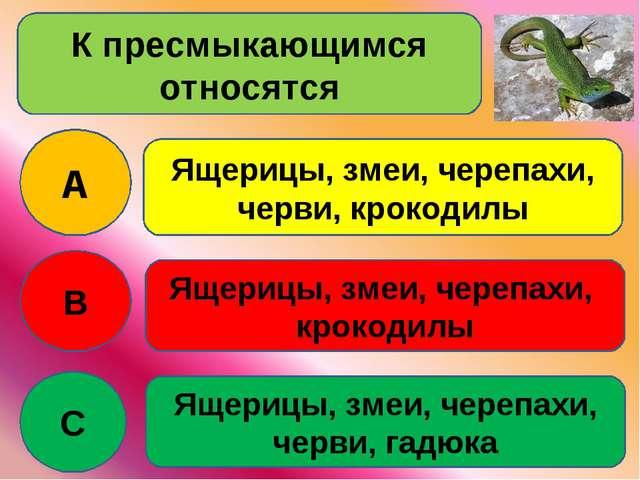 К пресмыкающимся относятся A B C Ящерицы, змеи, черепахи, черви, крокодилы Ящ...