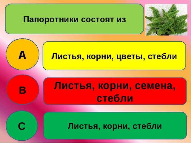 Папоротники состоят из A B C Листья, корни, цветы, стебли Листья, корни, семе...
