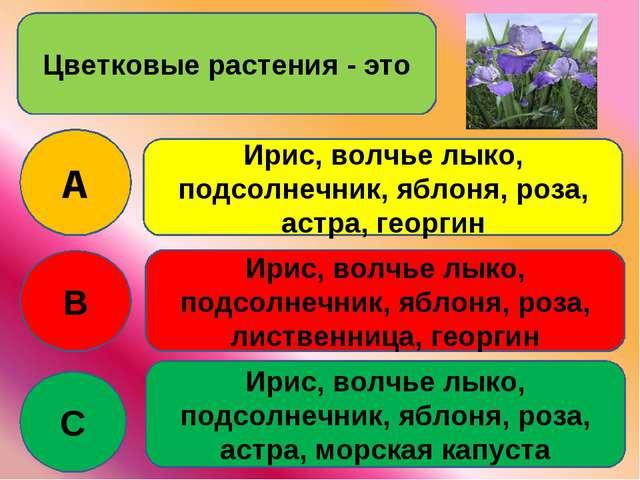 Цветковые растения - это A B C Ирис, волчье лыко, подсолнечник, яблоня, роза,...
