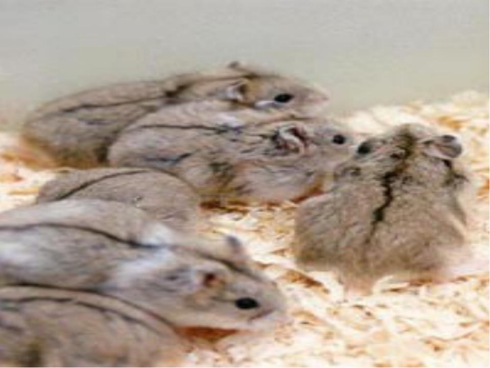 Подземные млекопитающие