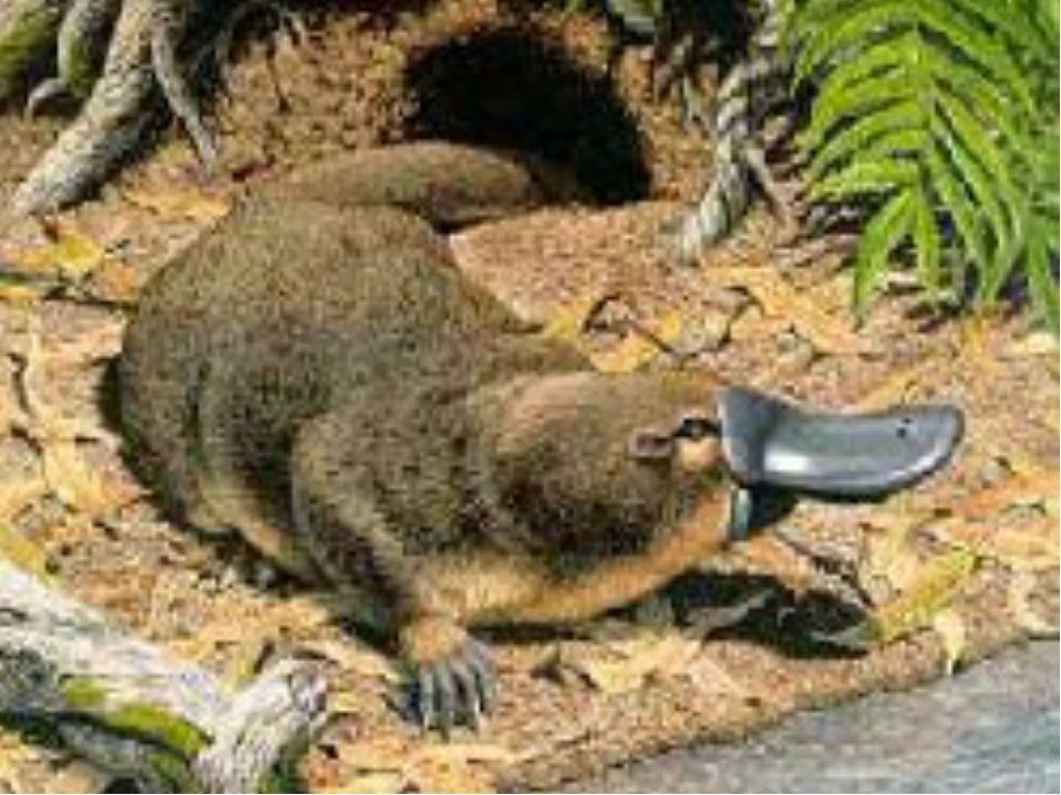 Околоводные млекопитающие