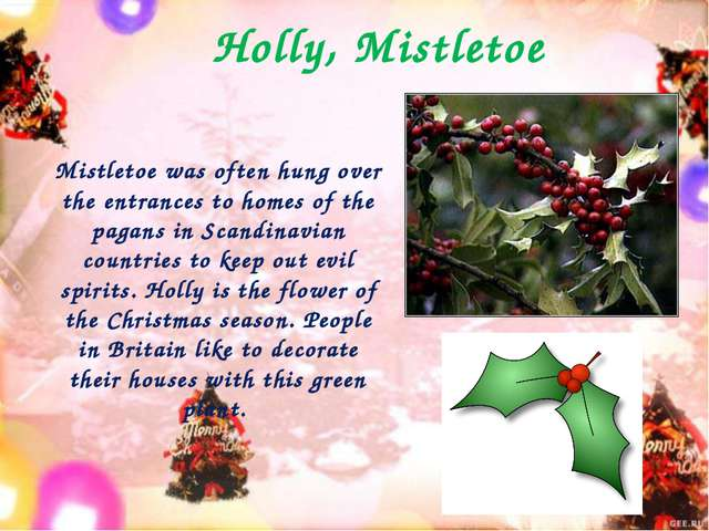 Holly, Mistletoe Mistletoe was often hung over the entrances to homes of the...