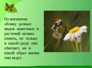 По внешнему облику разных видов животных и растений можно понять, не только