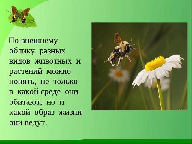 По внешнему облику разных видов животных и растений можно понять, не только...