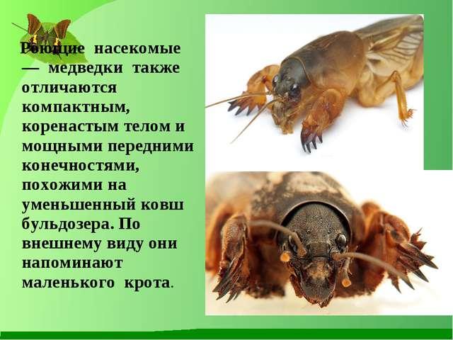 Роющие насекомые — медведки также отличаются компактным, коренастым телом и...