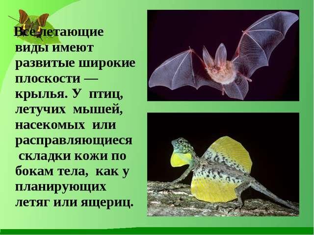 Все летающие виды имеют развитые широкие плоскости — крылья. У птиц, летучих...