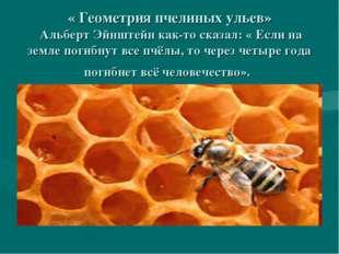 « Геометрия пчелиных ульев» Альберт Эйнштейн как-то сказал: « Если на земле