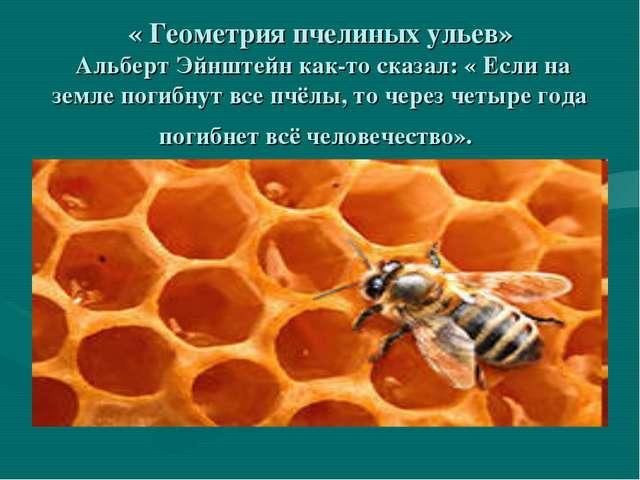 « Геометрия пчелиных ульев» Альберт Эйнштейн как-то сказал: « Если на земле...