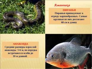 АНАКОНДА Средние размеры взрослой анаконды 5-6 м, но изредка встречаются особ