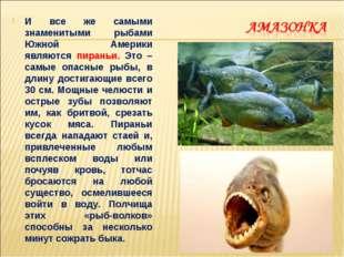 И все же самыми знаменитыми рыбами Южной Америки являются пираньи. Это – самы