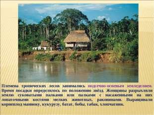 Племена тропических лесов занимались подсечно-огневым земледелием. Время поса