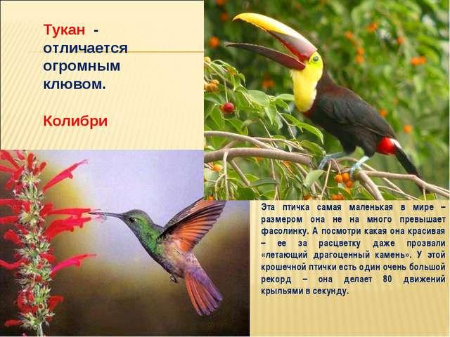 Колибри Эта птичка самая маленькая в мире – размером она не на много превышае...