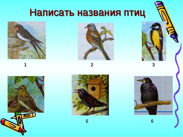 Написать названия птиц 1 2 3 4 5 6