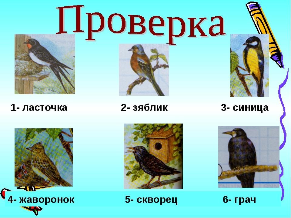 1- ласточка 2- зяблик 3- синица 4- жаворонок 5- скворец 6- грач