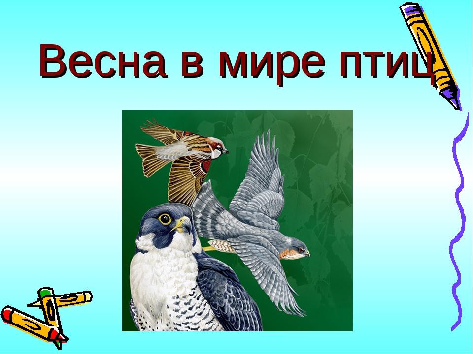 Весна в мире птиц